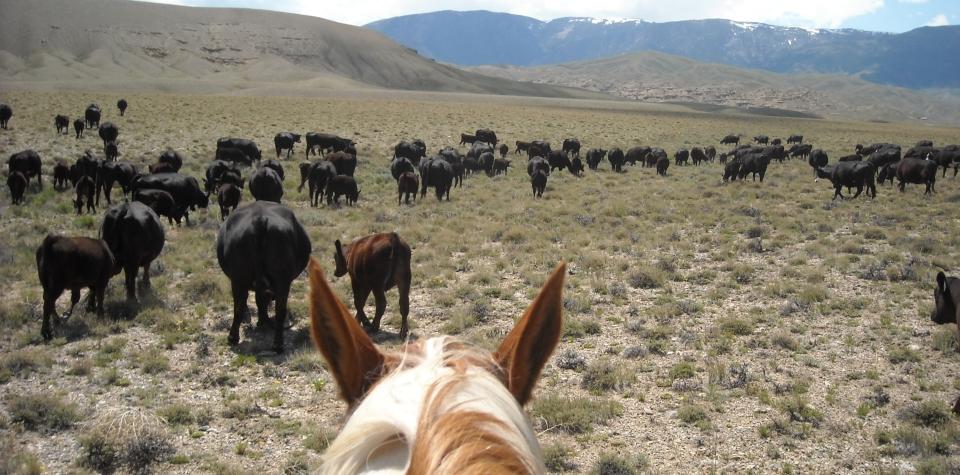 2009-cattle-drive-007.jpg