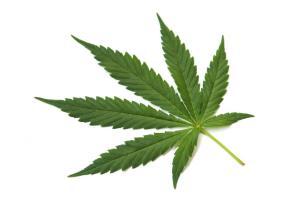a-marijuana-leaf[1]